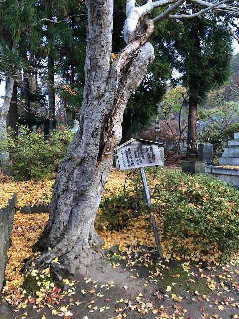 信濃守護の墓2.jpg