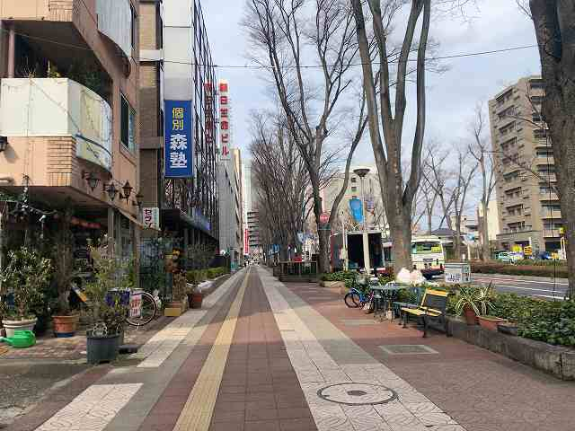 前橋2けやき通り2.jpg