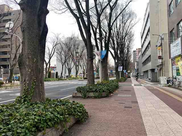 前橋3けやき通り3.jpg