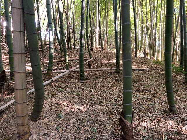堀の先は竹藪1.jpg