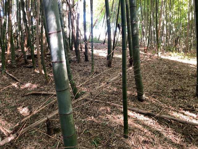 堀の先は竹藪2.jpg