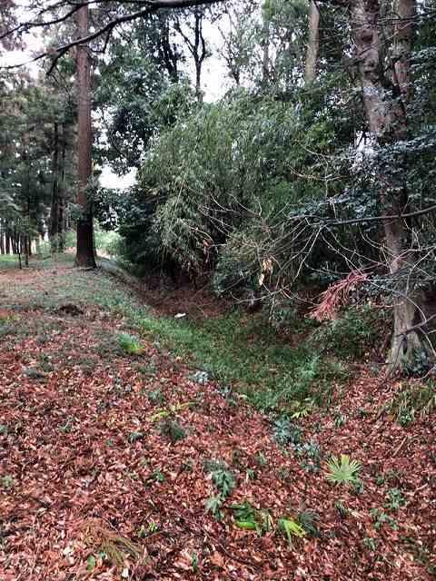 境内の堀2.jpg