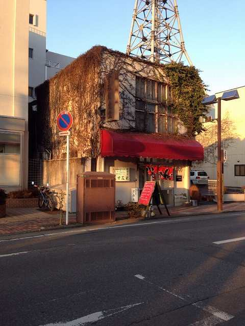 夕方のすみれ.jpg