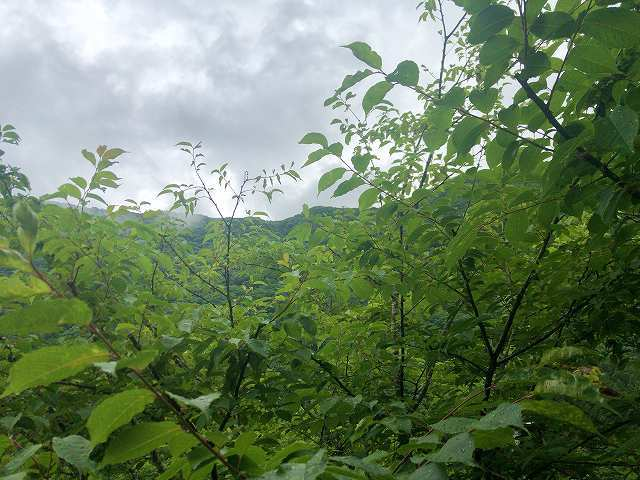 外の風景3.jpg