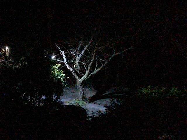 夜22.jpg