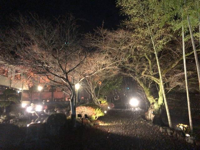 夜2桜並木1.jpg