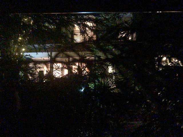 夜37生垣から2.jpg