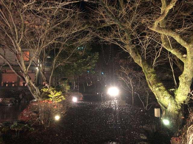 夜3桜並木3.jpg