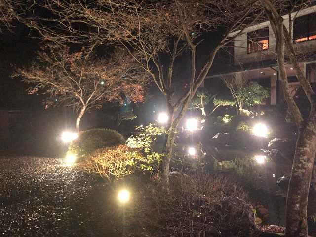夜9池の畔.jpg