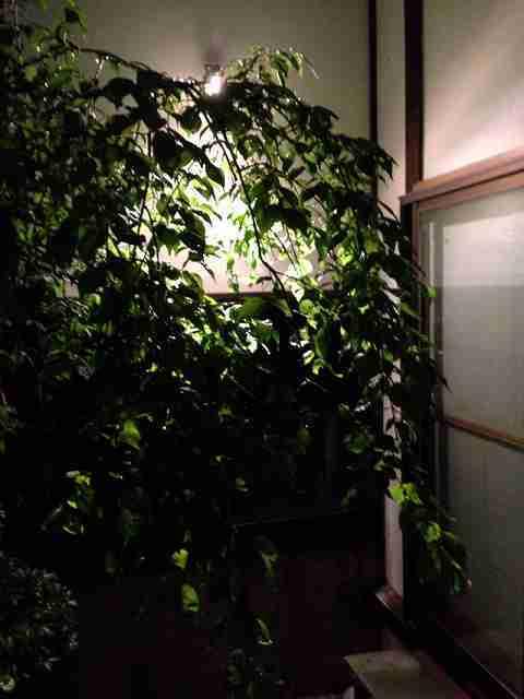夜の箱庭.jpg