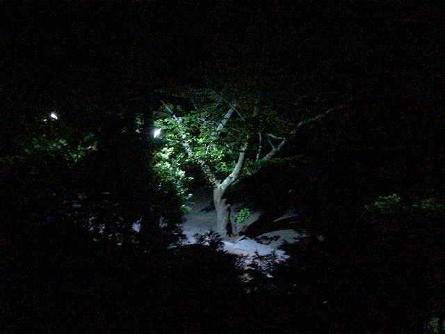 夜景はこれだけ.jpg