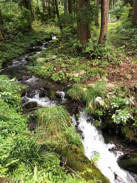 小川の清い水.jpg