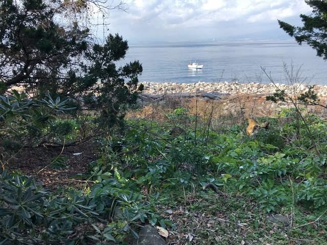 岬の西側の海1.jpg
