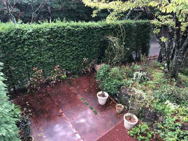 庭の朝露.jpg