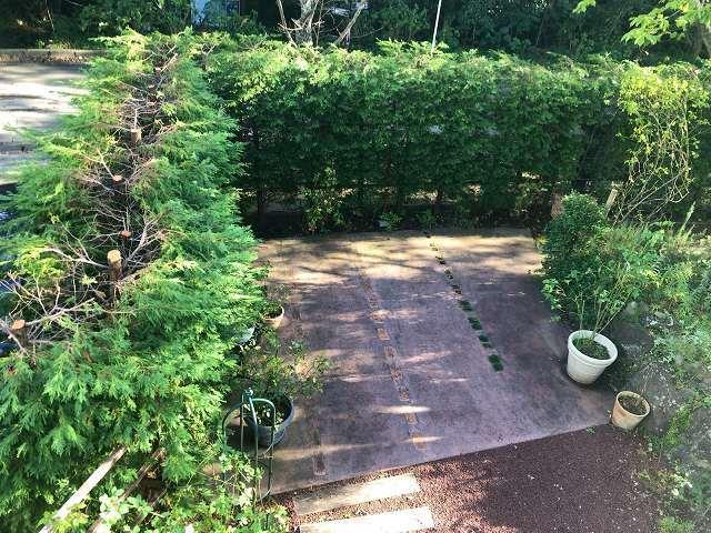 庭を見下ろす.jpg