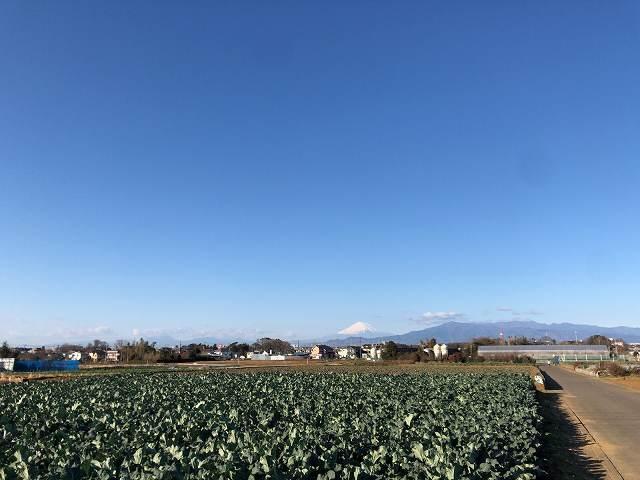 新年の富士山1.jpg