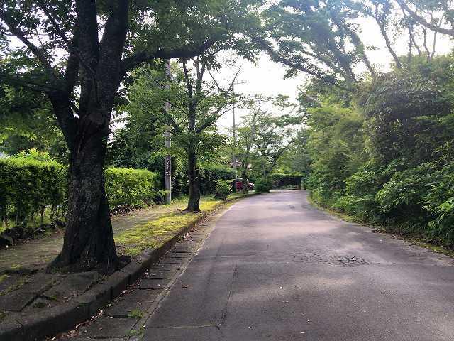 朝11散歩1.jpg