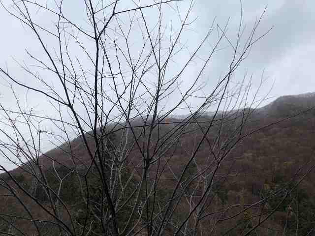 朝の山11.jpg