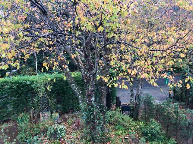 朝の庭2.jpg