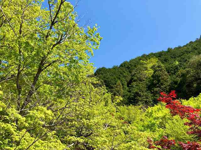 朝の新緑.jpg