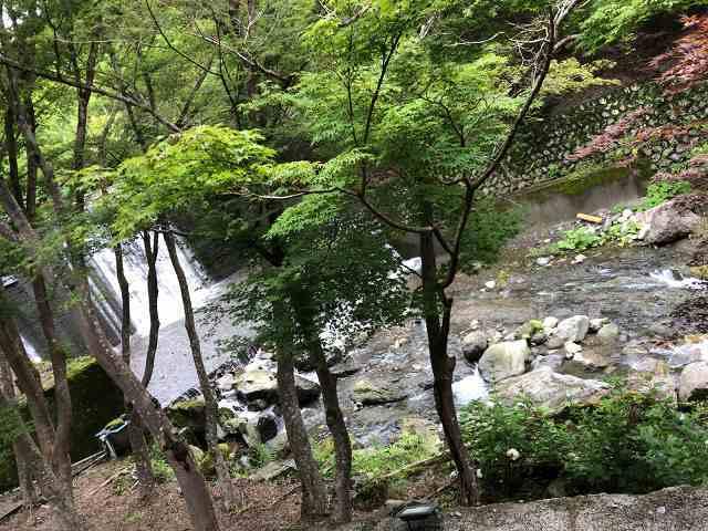 朝の渓流3.jpg