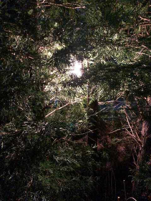 木々の陰に.jpg