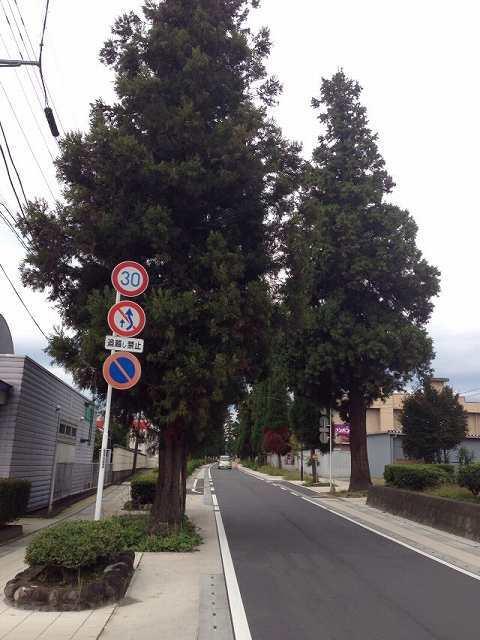 杉並木.jpg
