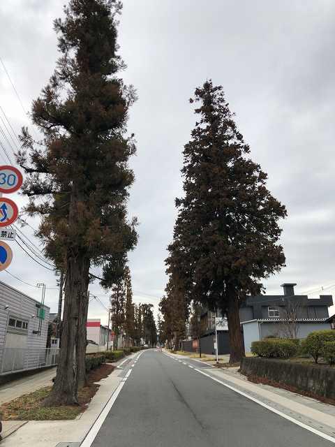 杉並木3.jpg