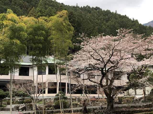 桜21.jpg