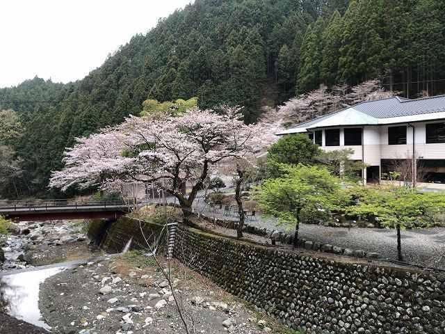桜23.jpg