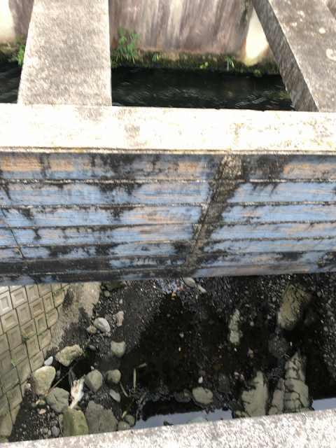 水路12川を渡る5下を見る.jpg