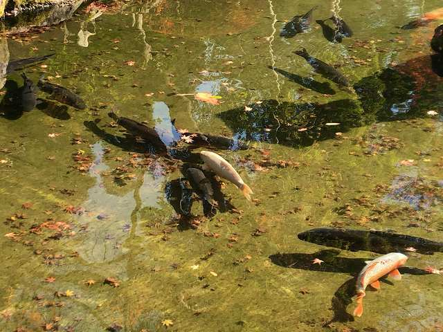 池16.jpg