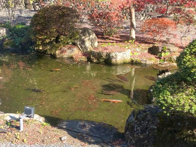 池6.jpg