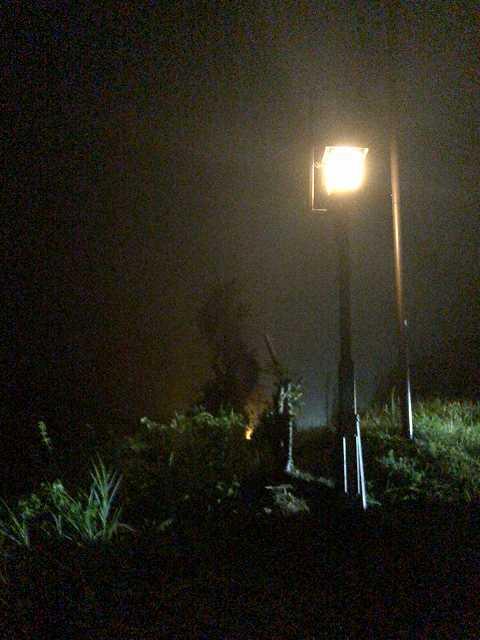 田に明かりが昇る.jpg