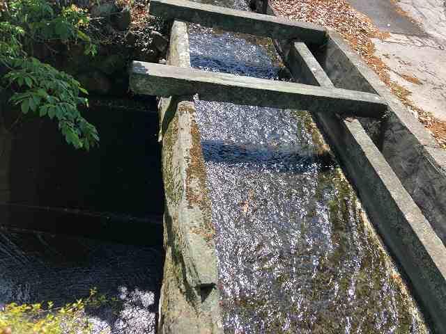 石樋7路と並んで川を渡っている5.jpg