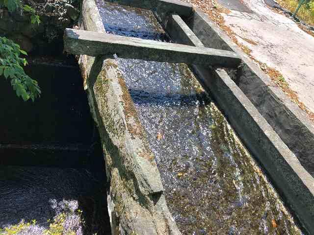 石樋8路と並んで川を渡っている6.jpg