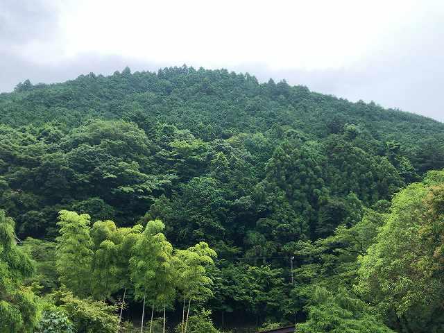 緑の風景2.jpg