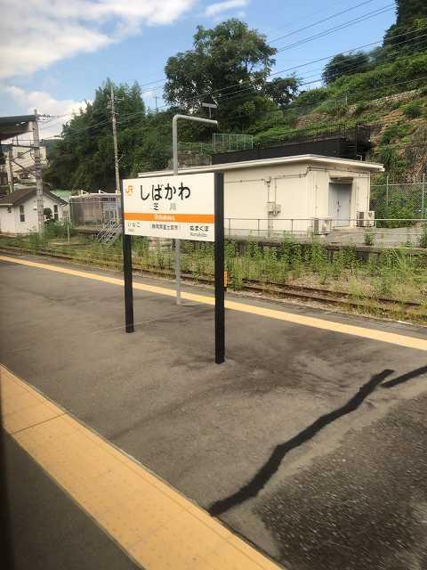 芝川1.jpg
