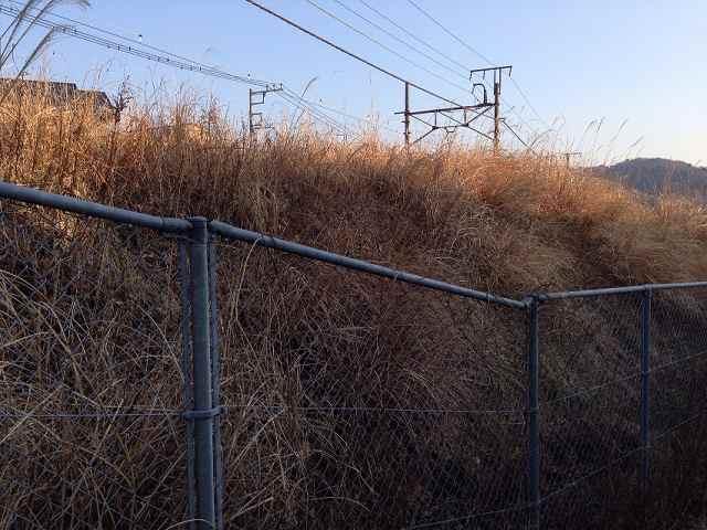 草むらがホーム跡1.jpg