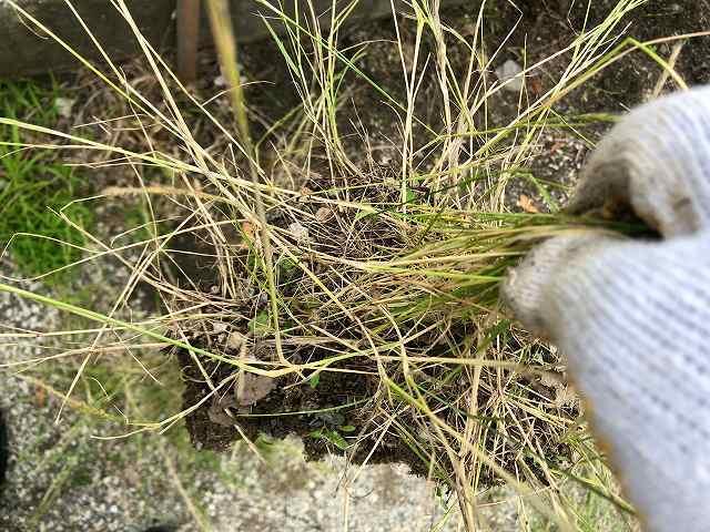 草刈り10私のエリアは簡単2手で抜ける2.jpg