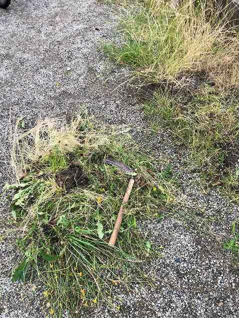 草刈り6私の鎌1.jpg