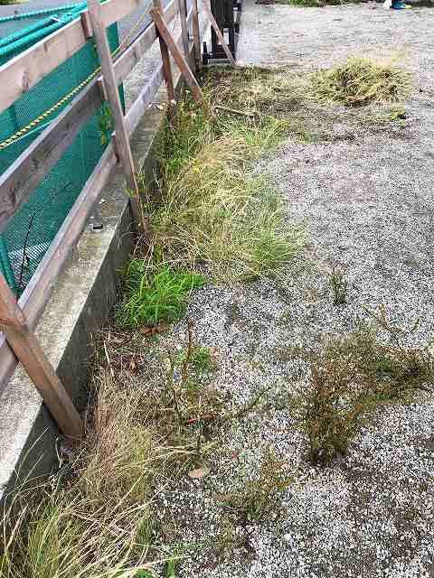 草刈り7私のエリア.jpg