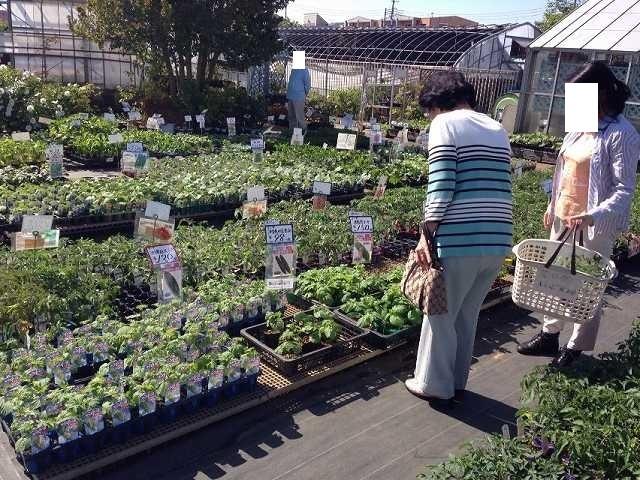 菜園6.jpg