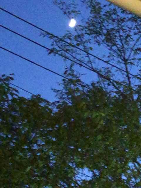 薄暮に月が.jpg