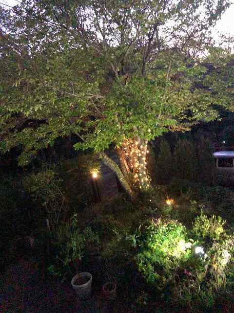 薄暮の庭.jpg