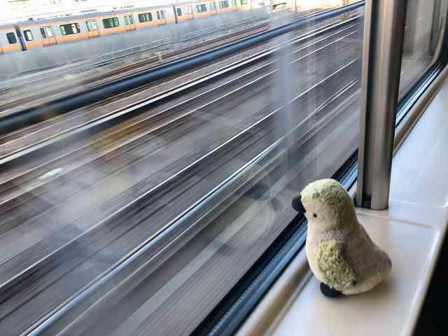 車窓から社会勉強中のプチ公1.jpg