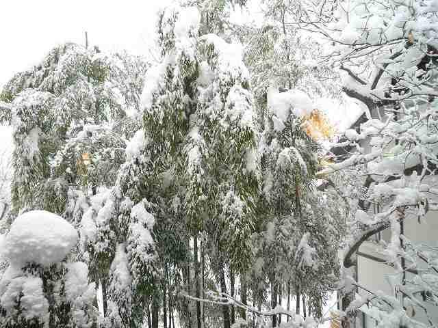 雪景色15.jpg
