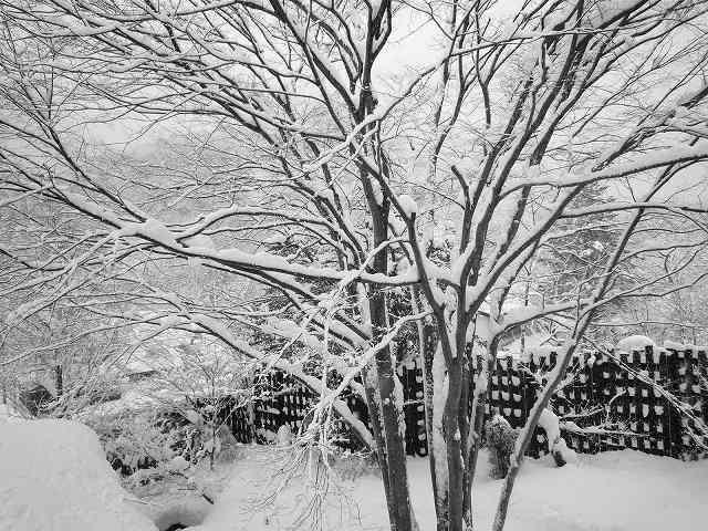 雪景色201.jpg